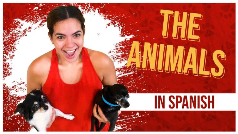 Weird Expedition in Mexico: Discover ANIMAL VOCABULARY in Spanish!